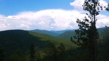 New Mexico4